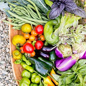 edible-garden-valerie-rice-rainbow-harvest-0314-m