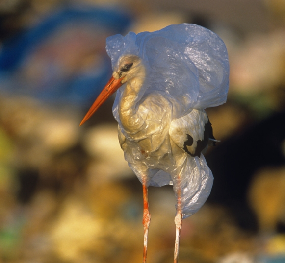 Bird in plastic