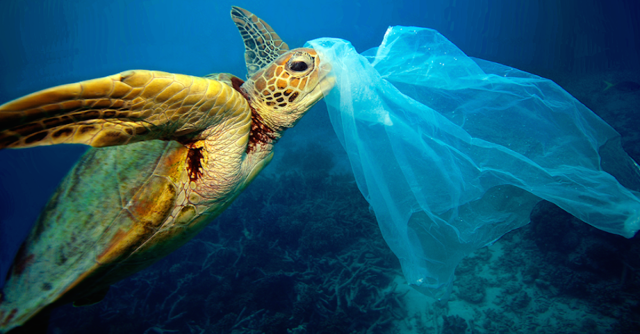 turtle - plastic-bag